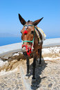 The donkey in thira santorini island greece Royalty Free Stock Images