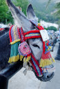 Donkey tourist attraction Stock Photography