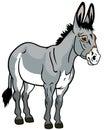 Donkey on white Royalty Free Stock Photo