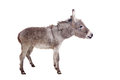 Donkey on white pretty isolated the background Royalty Free Stock Photos