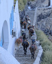 Donkeys descending steep walkway a cobblestone along a hillside santorini greece Stock Image
