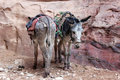 Donkeys donkey love in petra jordan Stock Photos
