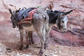 Donkeys donkey love in petra jordan Stock Photo