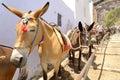 The donkeys Royalty Free Stock Photo