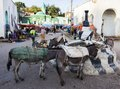 Donkeys wait to be loaded on market square in city of Jugol. Harar. Ethiopia. Royalty Free Stock Photo