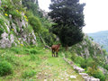 Donky walking through the hills in kotor Royalty Free Stock Photo