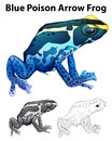 Doodle animal for blue poison arrow frog