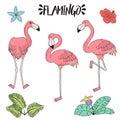 Doodle hand drawn rose pink flamingo set