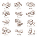 Doodle nuts. Vector hand drawn set isolate on white