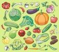 Doodle vector set of vegetables excellent illustration eps Stock Image