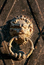 Door knocker bronze in the shape of a lion head on the old rusty gate close up Royalty Free Stock Images