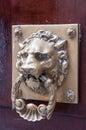 Door nob lion bras doorknocker on wood Stock Images