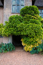 Doorway a rear to a country house with a vine growing over the Royalty Free Stock Photography