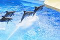Dophin Show Stock Photography