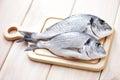Dorada fish Royalty Free Stock Photo