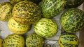 Dosakaya cucumis melo subsp agrestis var conomon subs resembling golden cucumber but with green patches turning darker on ripening Stock Photography