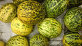 Dosakaya cucumis melo subsp agrestis var conomon subs resembling golden cucumber but with green patches turning darker on ripening Royalty Free Stock Photos