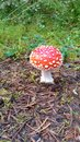 Dotty mushroom in forrest