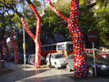Dotty Trees, Buenos Aires