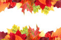 Double border of vibrant colorful autumn leaves or fall in shades red yellow orange and green with central white copyspace for Royalty Free Stock Photography
