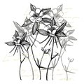 Double Columbine flowers. Collection of hand drawn flowers and plants. Botany. Set. Vintage flowers. Black and white Royalty Free Stock Photo