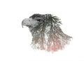 Double Exposure Portraits of Eagle