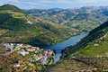 Douro river vines view of terraced hills covered in port producing in the region of portugal Stock Photos