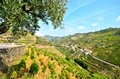 Douro Valley: Vineyards and small village near Peso da Regua, Portugal Royalty Free Stock Photo