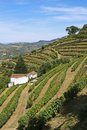 Douro vineyard Royalty Free Stock Images