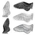Dove bird wings set