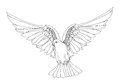 Dove in free flight. Isolated vector on background. Royalty Free Stock Photo