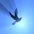 Dove holy spirit sky light flare Royalty Free Stock Photo