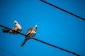 Dove is a ture Lover,two birds are on wire. They are a couple an