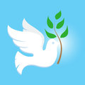 Dove white symbol of peace Stock Images