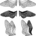 Dove wings Royalty Free Stock Image