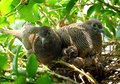Doves and babies or zebra or morning Royalty Free Stock Photos