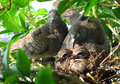 Doves and babies or zebra or morning Royalty Free Stock Image
