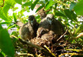 Doves and babies or zebra or morning Royalty Free Stock Photography