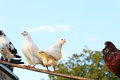 Doves beautiful outdoors close up Stock Photos
