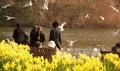 Doves in hyde park london shoot uk people was feeding Stock Photos