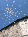 Doves of peace Royalty Free Stock Photo