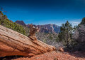 Picture : Downed Tree in Kolob Canyon  table