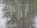 Downpour heavy rain on the street spring falling on a city street Stock Photos