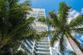 Downtown miami along biscayne bay with condos and palm trees Stock Images