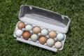 Dozen eggs ranch of various colors in compostable egg carton on green grass lawn Royalty Free Stock Photography