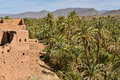 Draa valley, palm plantations, Morocco Royalty Free Stock Photo