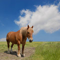 Draft horse Royalty Free Stock Photography