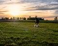 Draft horse on a Kentucky horse farm Royalty Free Stock Photo