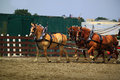 Draft horse show or drill at montgomery county agriculture fair maryland usa Stock Images