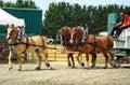 Draft Horse Show Royalty Free Stock Photo